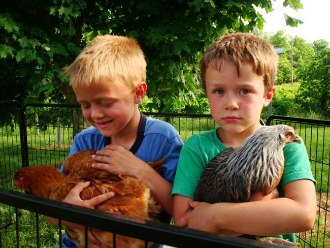 Henry and Walt with hens at River Run Farm and Pottery.