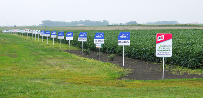 Rows of genetically-modified hybrid soybeans labeled to track yield